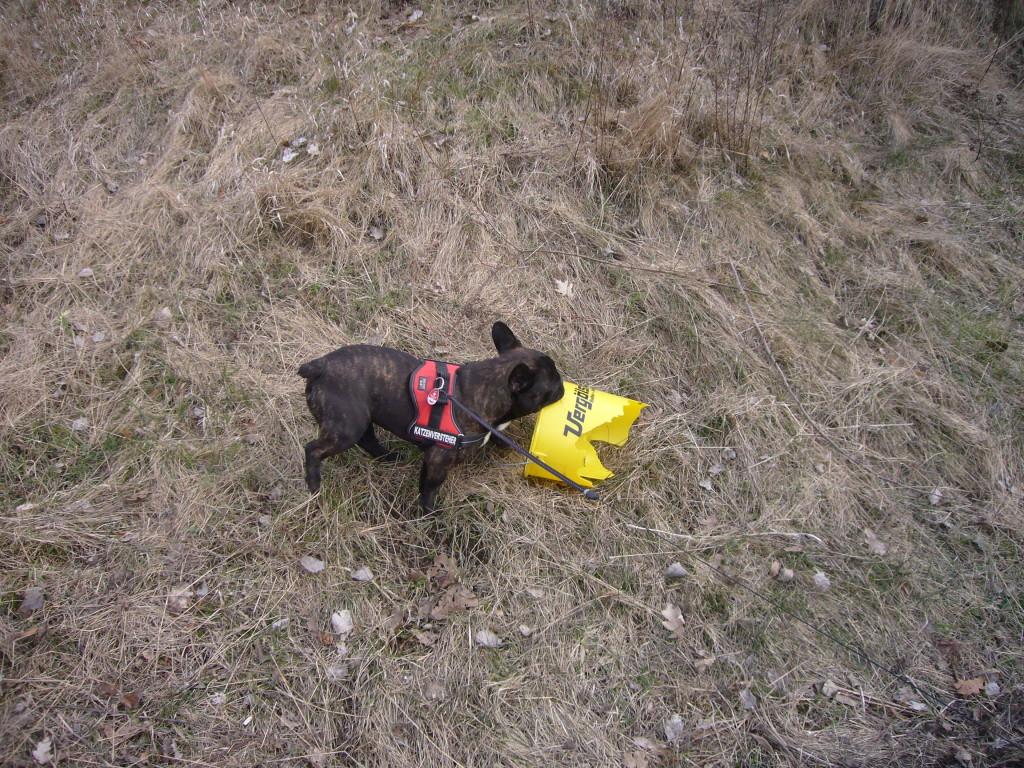 Wobei ein Hund sich bei der Aufräumaktion aktiv beteiligt hat.